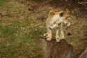 Foto č. 10 z galerie: Mezi lvy