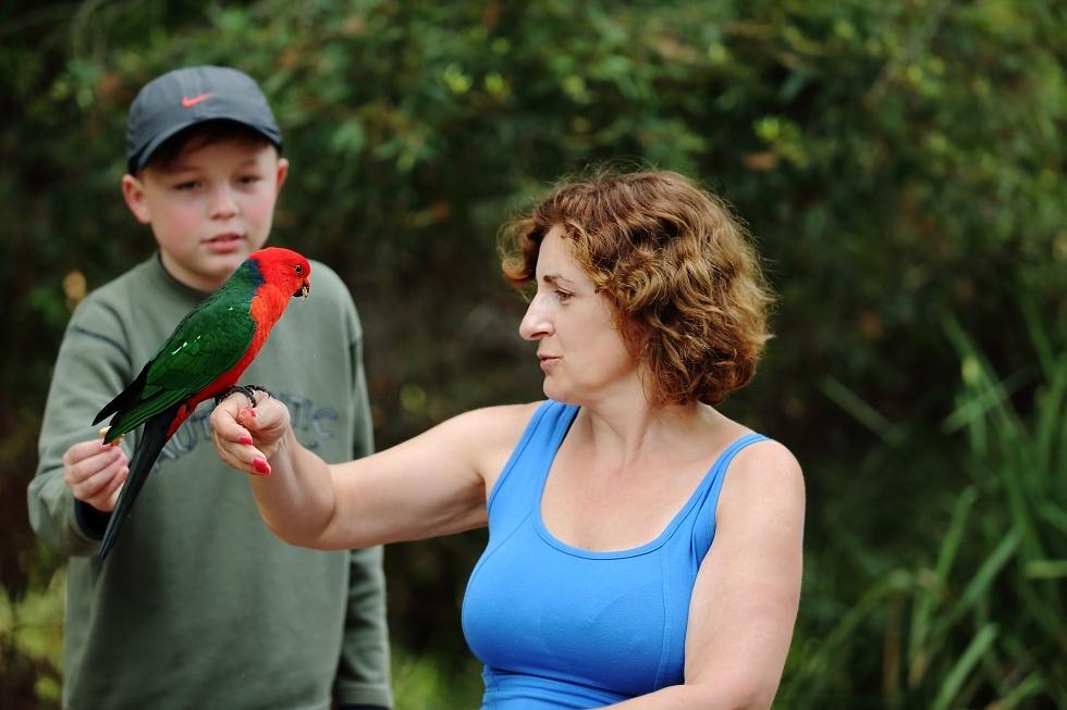 Papoušek královský (Alisterus scapularis) + Ilča a Áďa